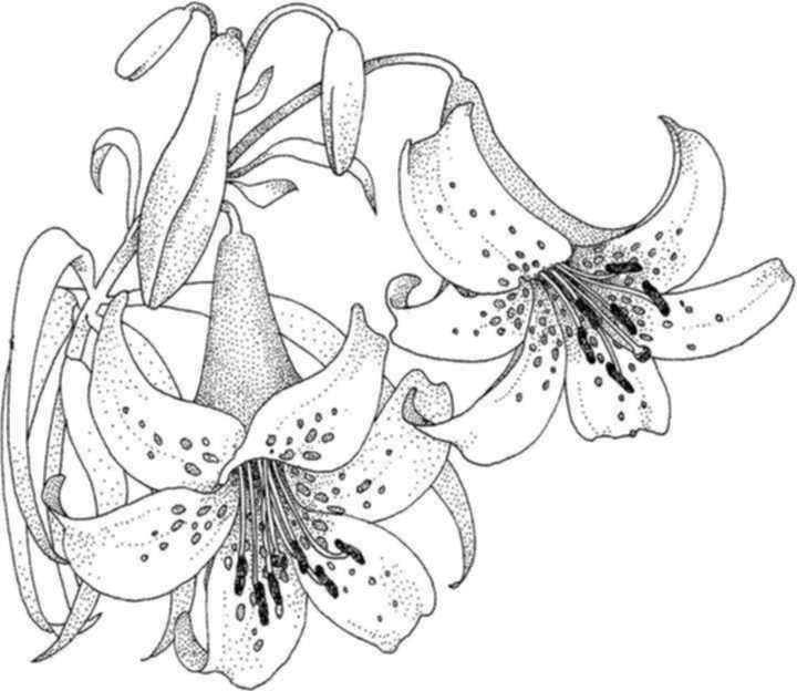 Index Of Windowcolor Vorlagen Blumen