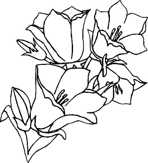 Index of /windowcolor/vorlagen/blumen